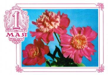 С праздником 1 мая, советская открытка, красные цветы, 1976