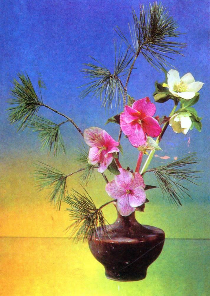 Цветы, советская открытка. Фотограф Р. Якименко. Морозник и сосна Веймутова