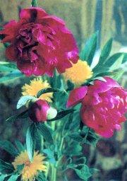 Цветы, советская открытка. Фотограф Г. Костенко