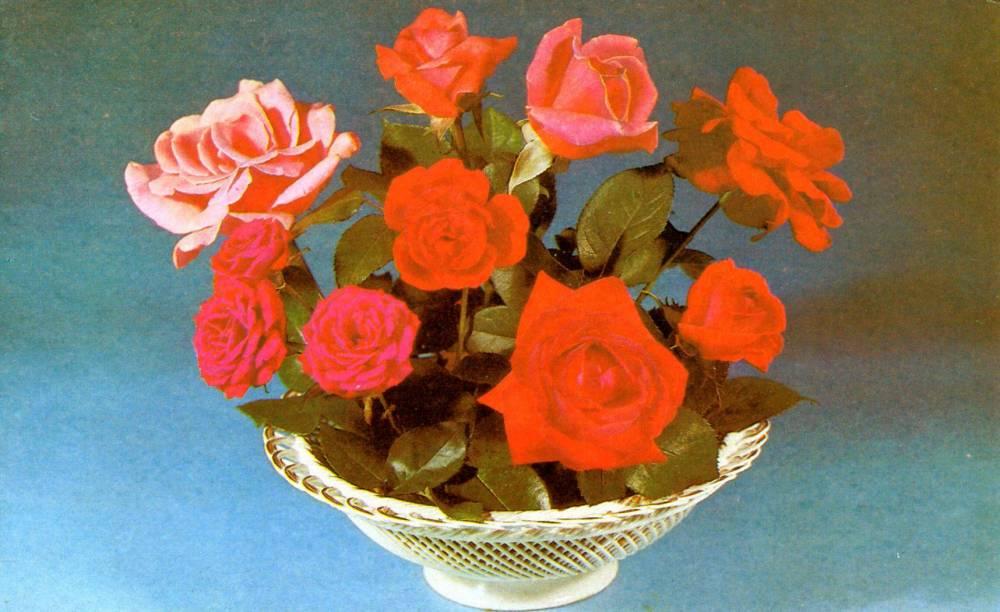 С днем 8 марта, советская открытка. Фотограф Л. Хруцко. 1984 год. Розы в корзине