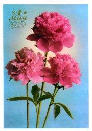 С праздником 1 мая, советская открытка, красные цветы