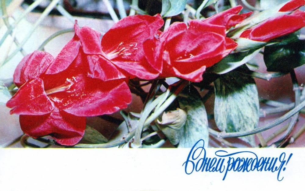 С днем рождения, советская открытка. Букет цветов. Фотограф В. Машков