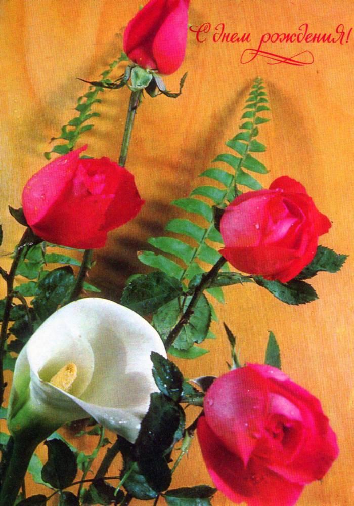 С днем рождения, советская открытка. Букет цветов. Фотограф В. Баранников