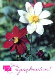 С праздником 1 мая, советская открытка, цветы и пчела, 1968