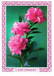 С днем рождения, советская открытка. Три цветка. Фотограф Г. Костенко