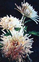 Цветы, советская открытка. Фотограф Г. Гуссейн заде