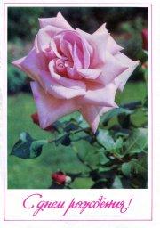 С днем рождения, советская открытка. Роза. Фотограф Н. Матанов