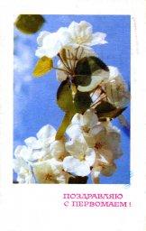 С праздником 1 мая, советская открытка. Художник А. Тюрин. Яблоневый цвет. 1968. Отпечатано в Советский художник.
