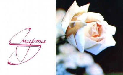 С днем 8 марта, советская открытка. Фотограф Е. Савалов. 1973 год. Белая роза