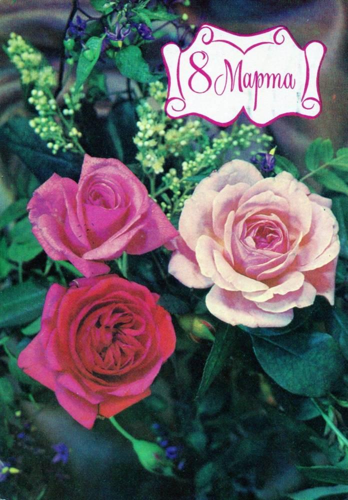 С днем 8 марта, советская открытка. Художник И. Дергилев. 1979 год. Розы