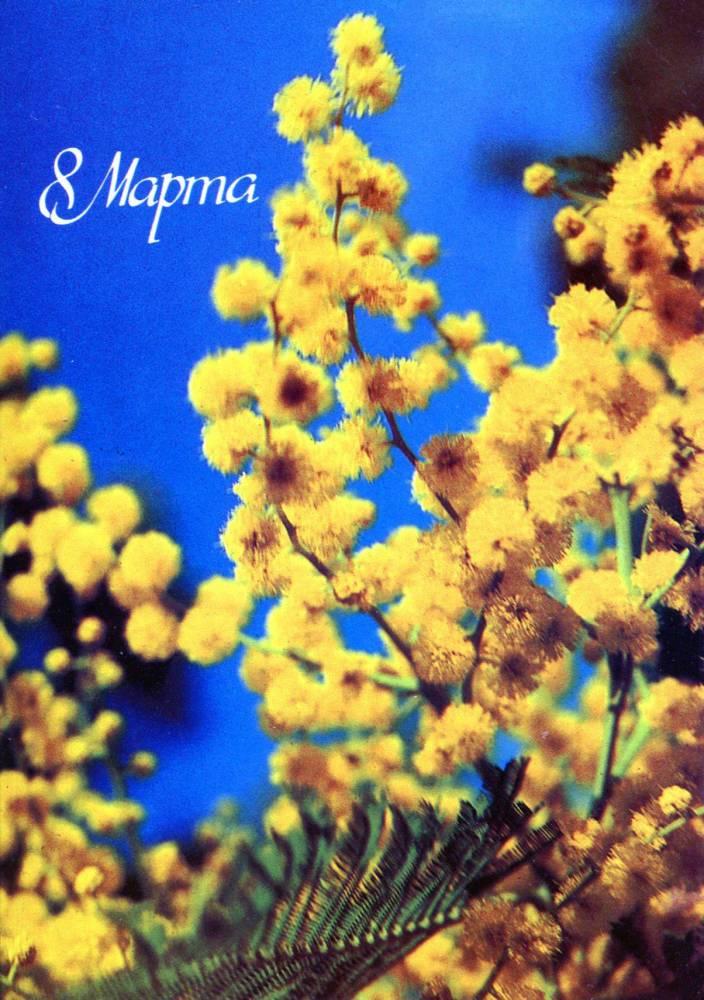 С днем 8 марта, советская открытка. Художник В. Панов. 1986 год. Желтые цветы