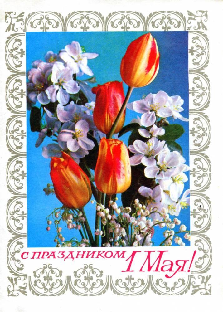 С праздником 1 мая, советская открытка, красные тюльпаны и яблоневый цвет