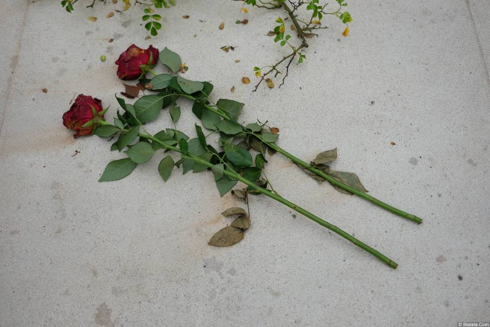 Две розы на кладбище Сент-Женевьев-де-Буа